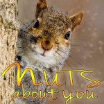 Blog Tour, Author Spotlight and Review: Nuts About You by Kate Lowell
